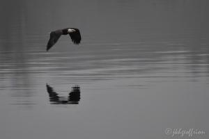 Bald Eagle Lake Mtka